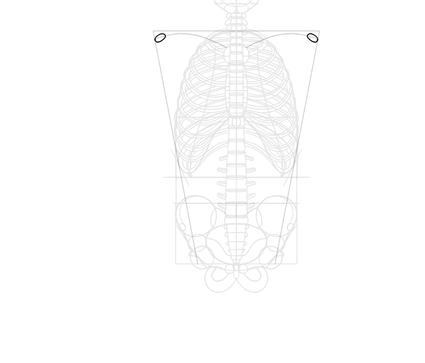 clavicle guide lines