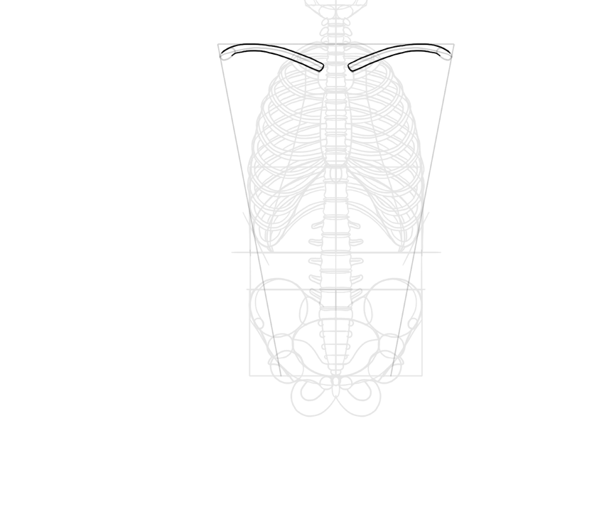 outline of clavicles