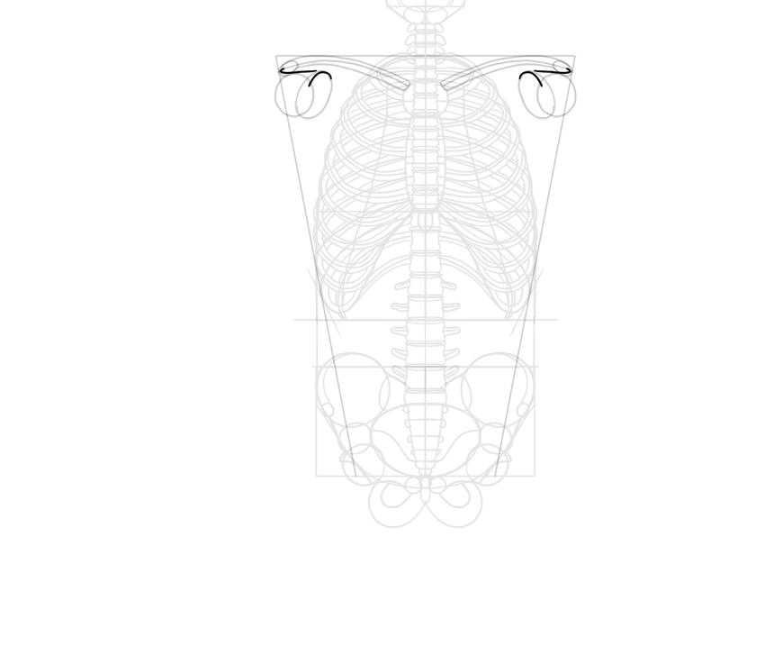 simplified scapula protrusions