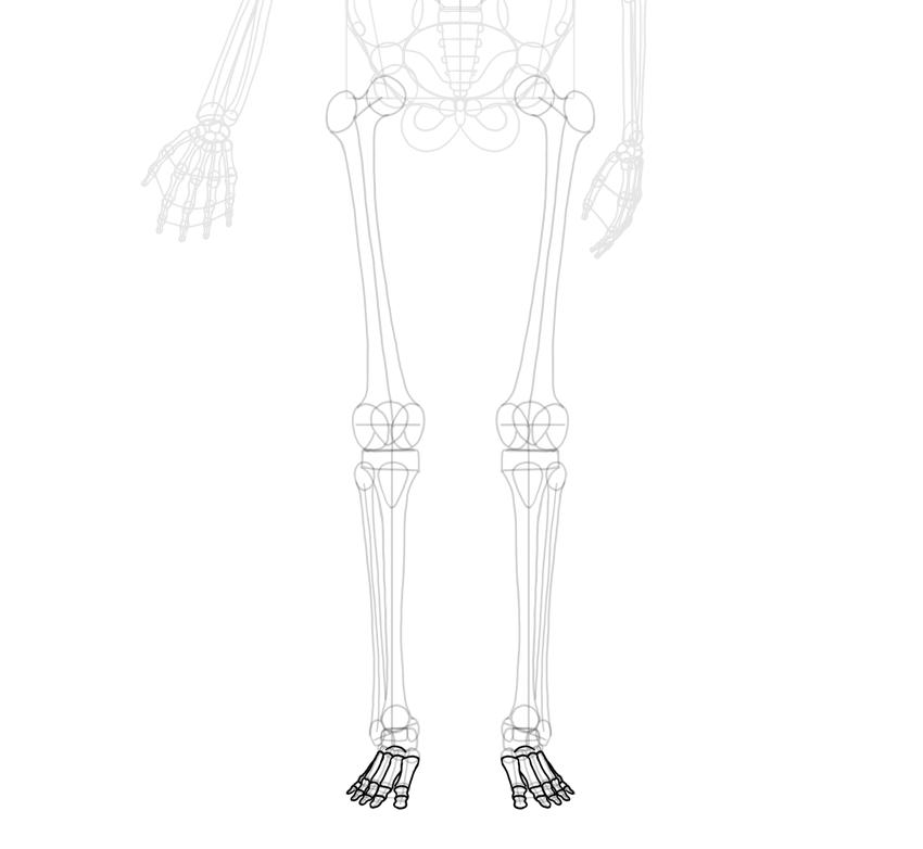 toe bones outlined