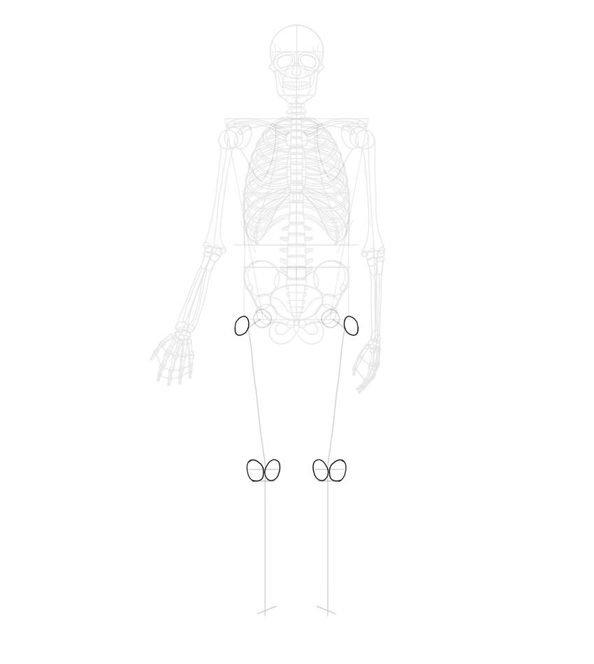 detail of femur