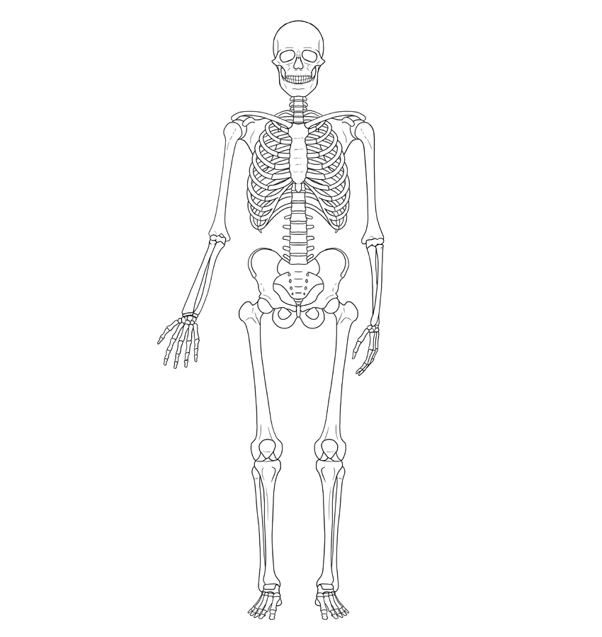 learn how to draw skeleton