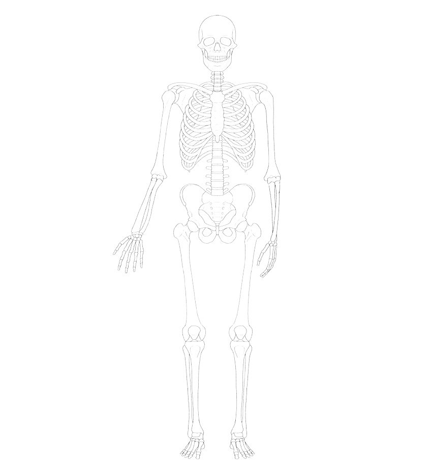 skeleton line art