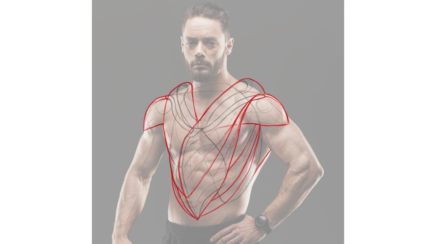 human bird muscles