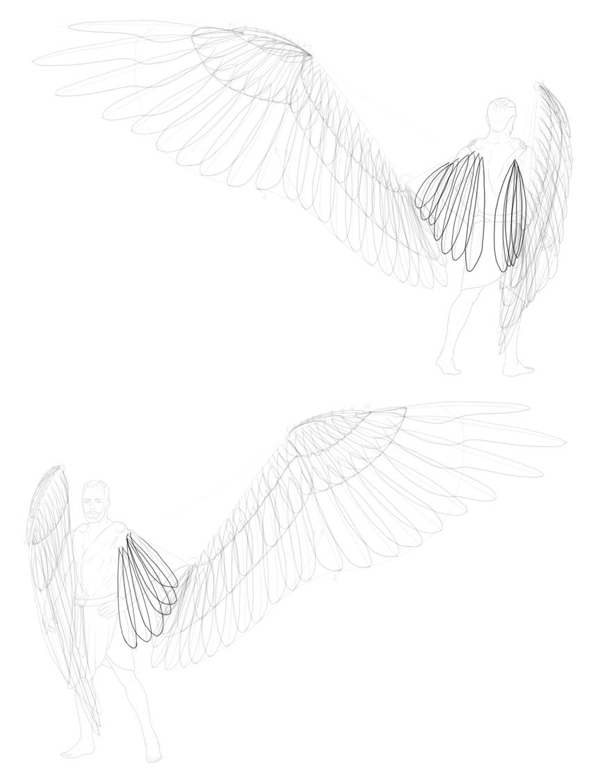 scapulars tertials shape