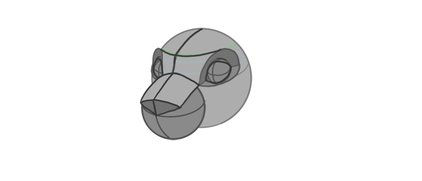shape of the nasal bridge