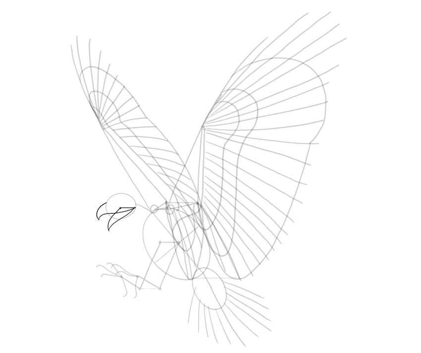 haw beak gyide lines