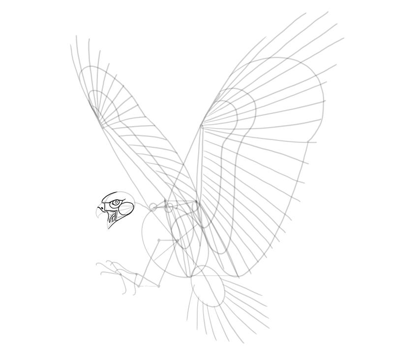 hawk head details