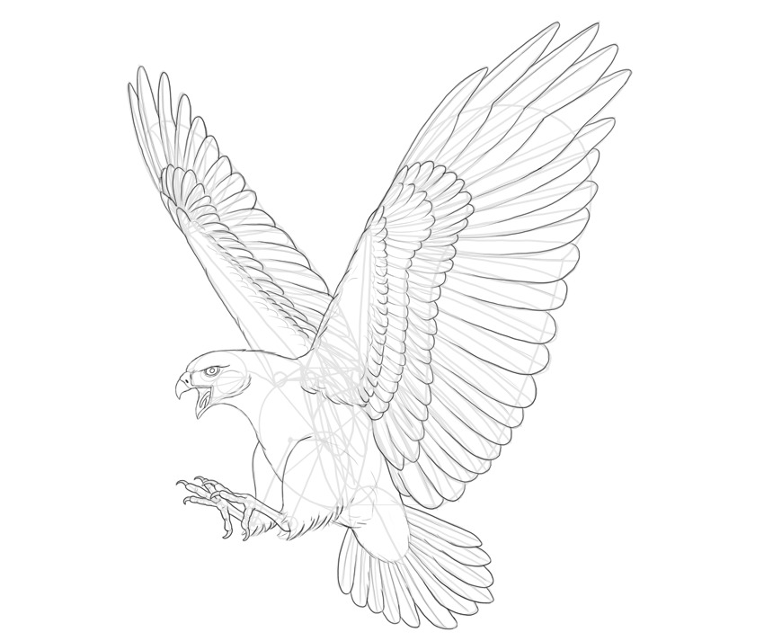 hawk drawing outline