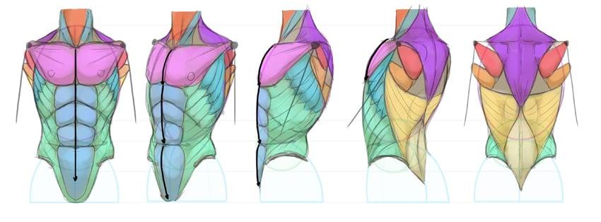 torso central line