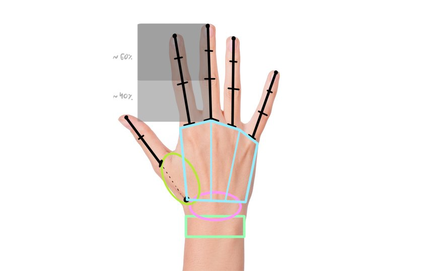 proportions of manga hand