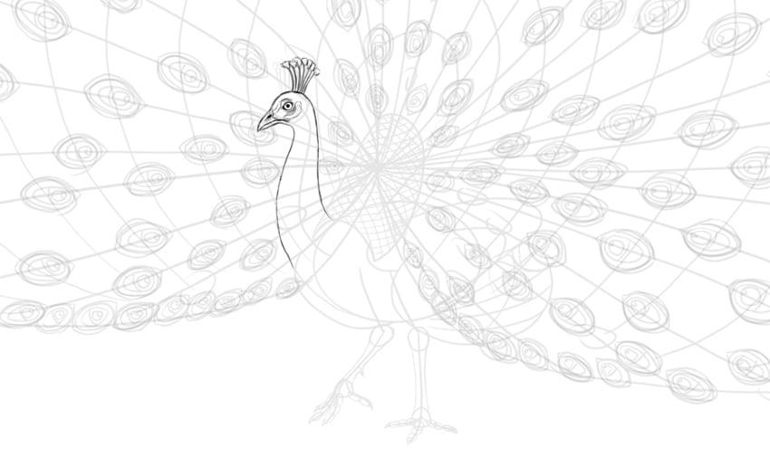 peacock head details