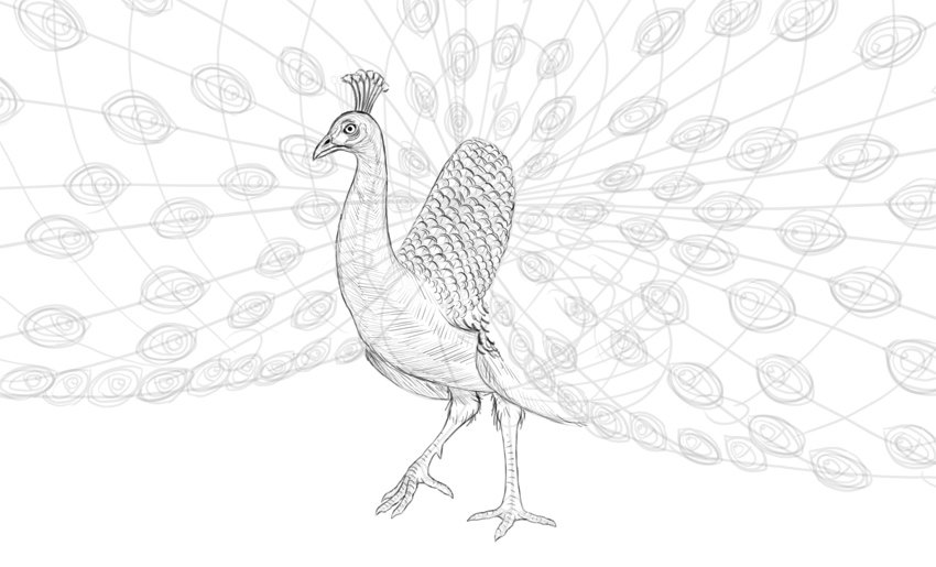 peacock simple shading