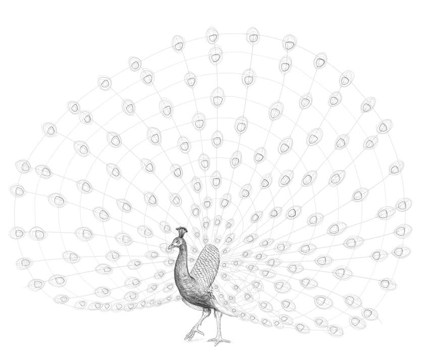peacock simple spots
