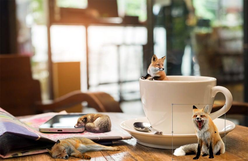 add fourth fox