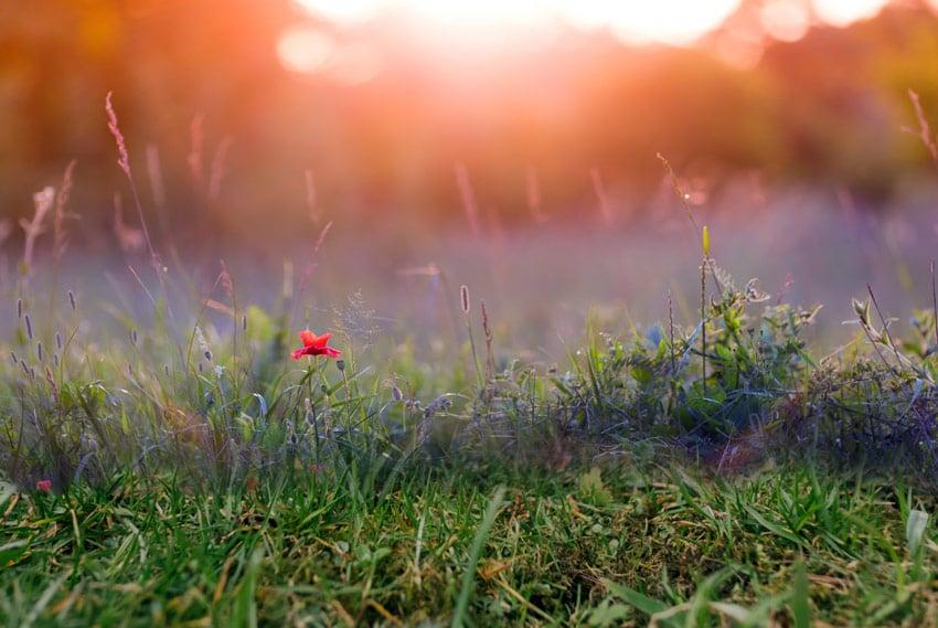 darken the grass