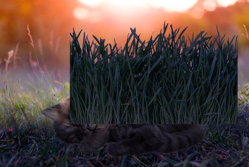 make grass blue