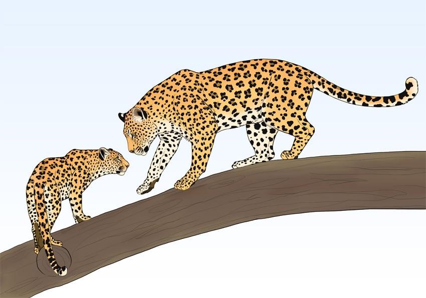 add leopard pattern