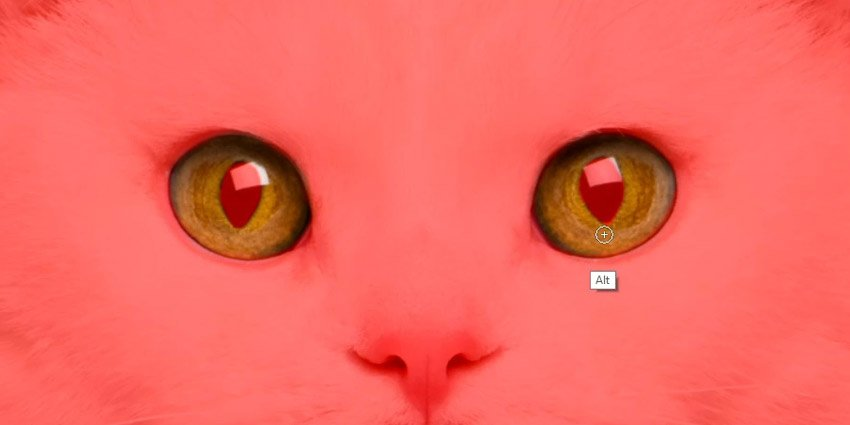select the pupils