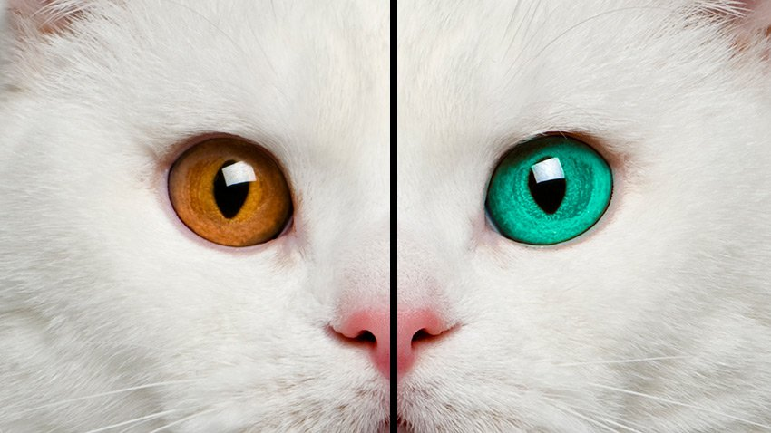 changing eye color in an image with photoshop