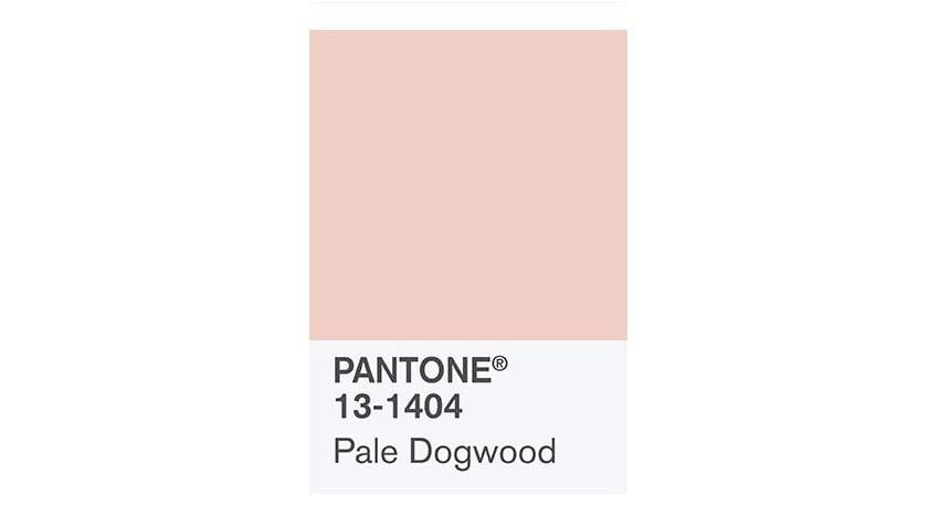 Pantone dogwood