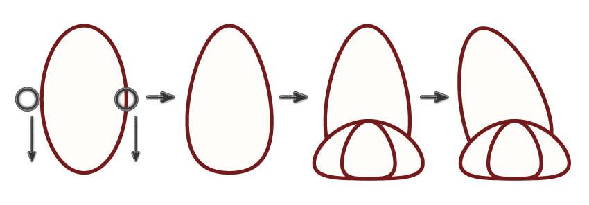 creating the bunny hind leg