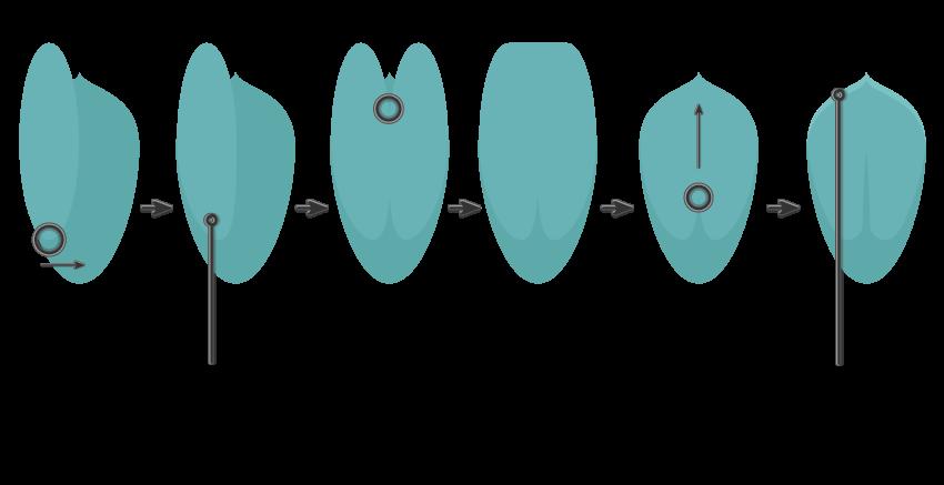 creating the leaf of Echeveria Succulent 2
