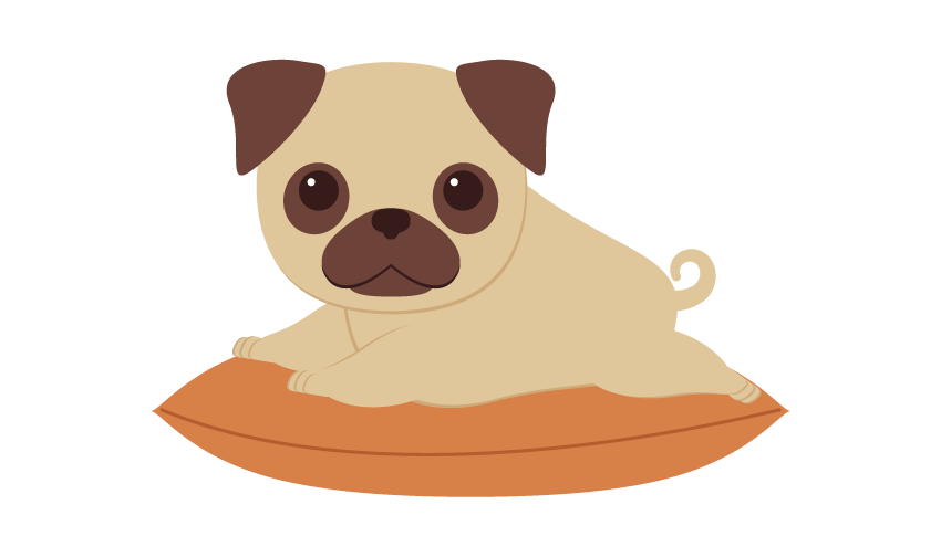 placing the pug on the pillow