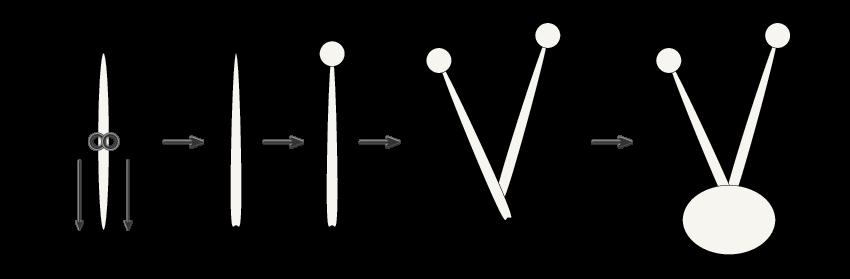 creating the antenna