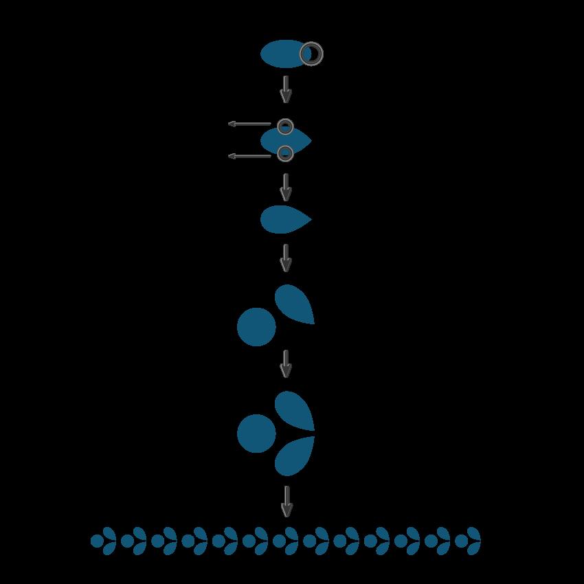 creating the decorative line
