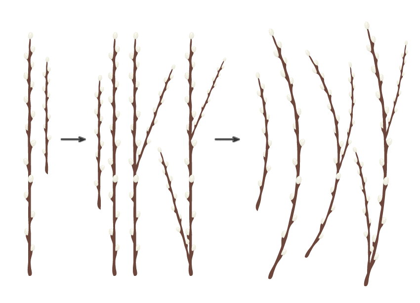 how to create the different branches