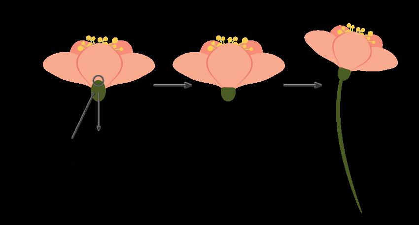 finishing creating the half open flower