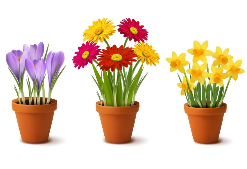 Spring and Summer Flowers
