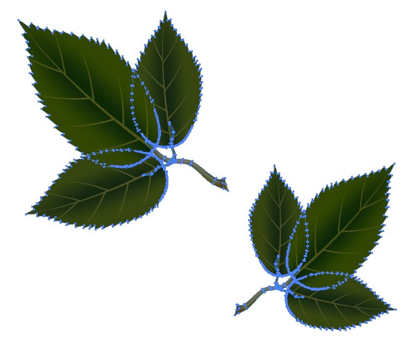 three leaves to one branch