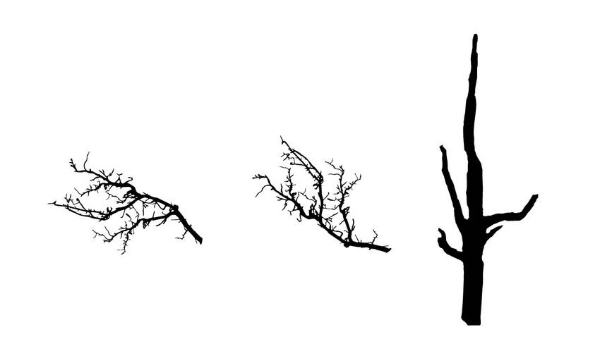 reflect branch draw trunk