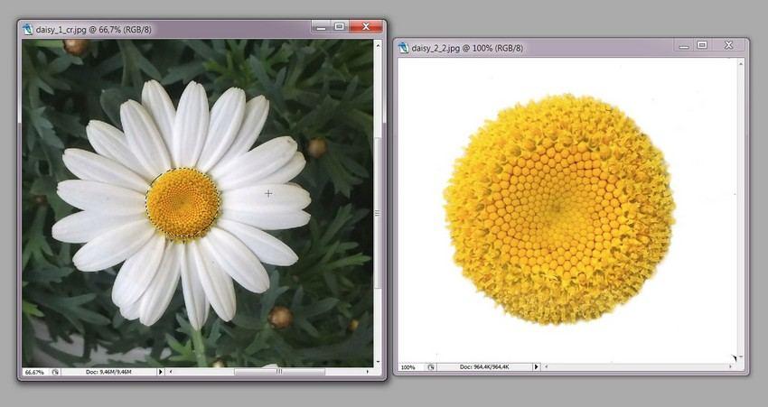 photoshop daisy