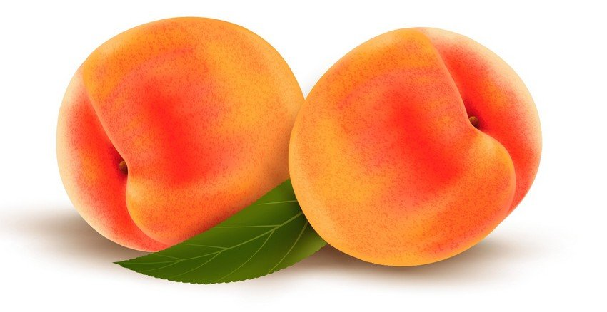 finish drawing of vector mesh peaches