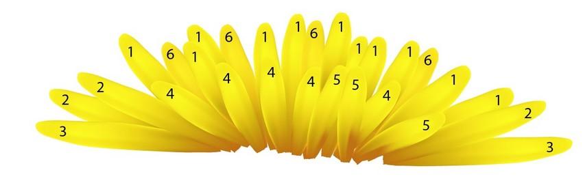 assemble vector flower