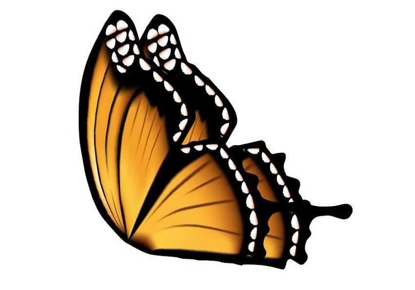butterfly mesh illustrator vector tutorial