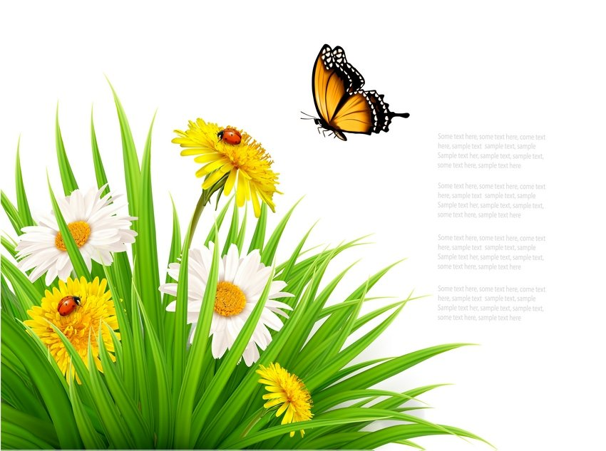 Nature Summer Background with Daisy Flower