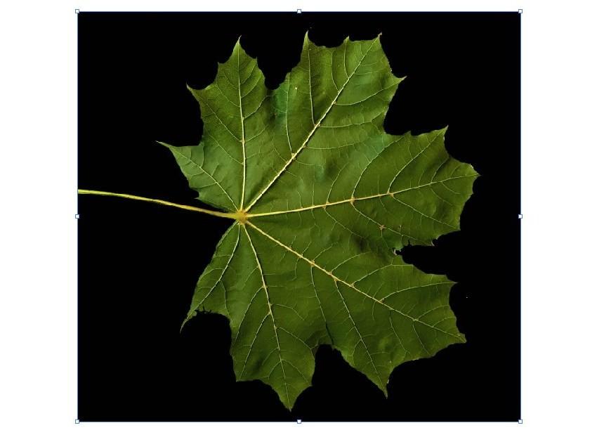 leafjpg