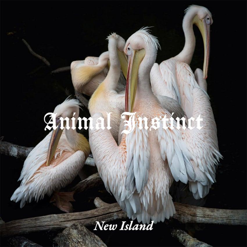 Album Cover Maker Featuring Stunning Pelicans