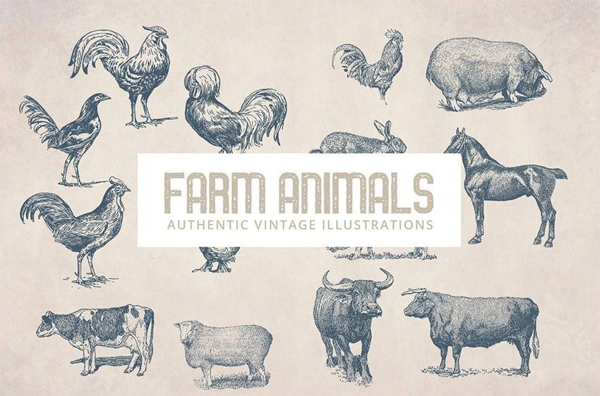 Vintage Animals Illustrations
