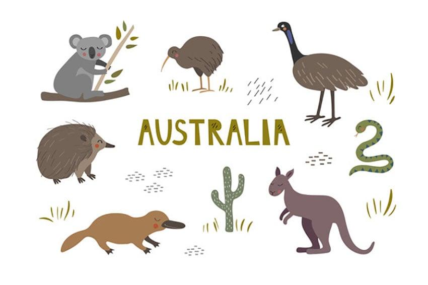 Cute Australian Animal Illustrations