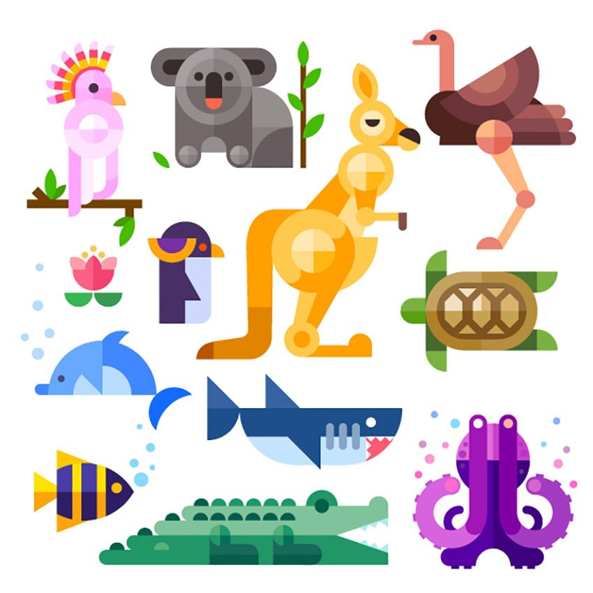 Flat Australian Animal Illustrations