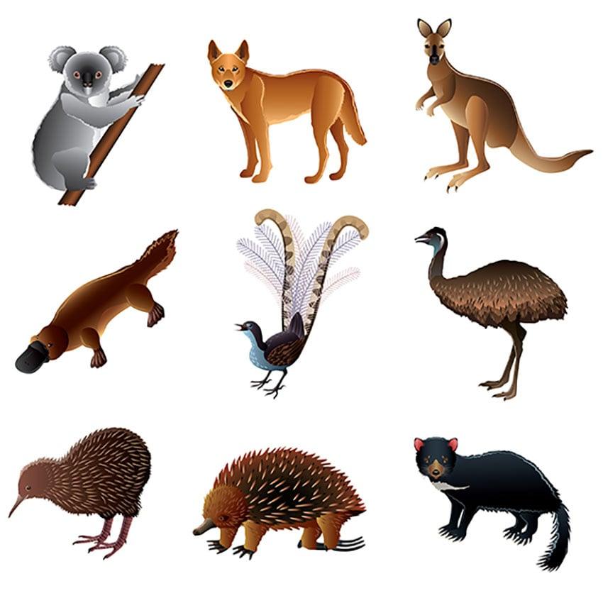 Australian Animal Illustration Set Vol. 2