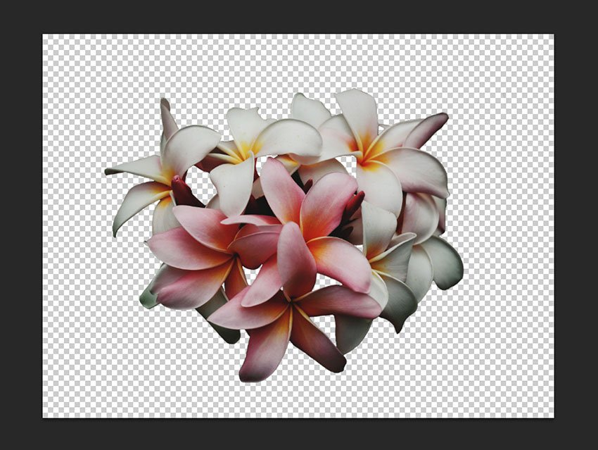 Flower image cleaned up and ready to use on our poster