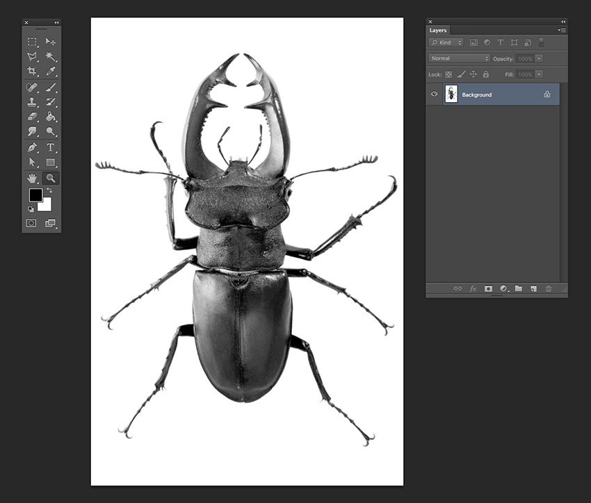 In the same manner as the previous steps open the beetle image and repeat step 2