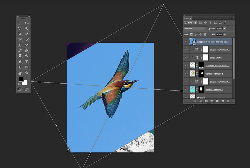Drag the bird image into the Ps document