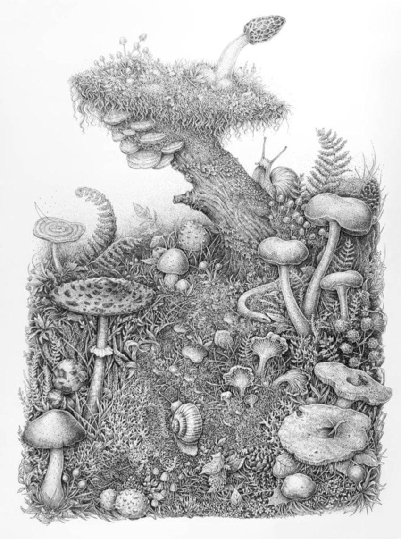 Mushrooms by Eugenia Hauss